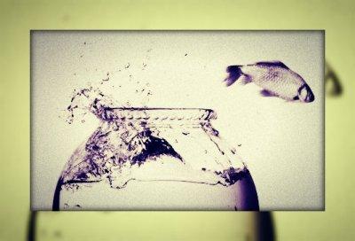 Peixe fora D'água 02 - IN