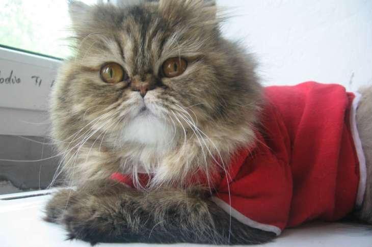 CAT 01