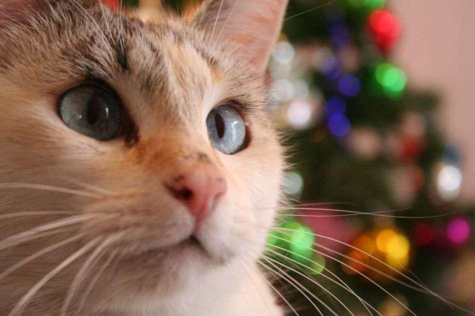 Especial de Natal: Posso dar guloseimas ao meupet?
