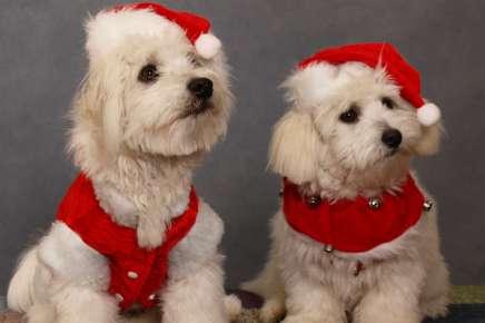 Quer vestir seu bichinho neste natal? Veja esse textoantes.