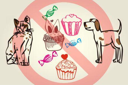 Comer chocolate pode matar cães egatos